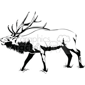 black and white Elk roaring side profile clipart. Royalty.