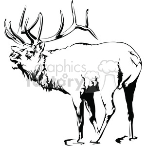 black and white Elk roaring clipart. Royalty.