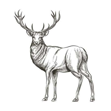 Elk clipart black and white 7 » Clipart Station.