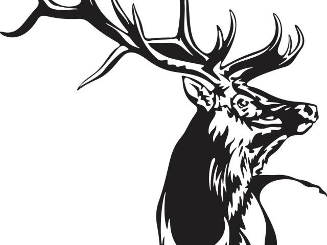 Free Elk Clipart canadian moose, Download Free Clip Art on Owips.com.