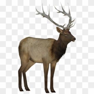 Elk PNG Transparent For Free Download.