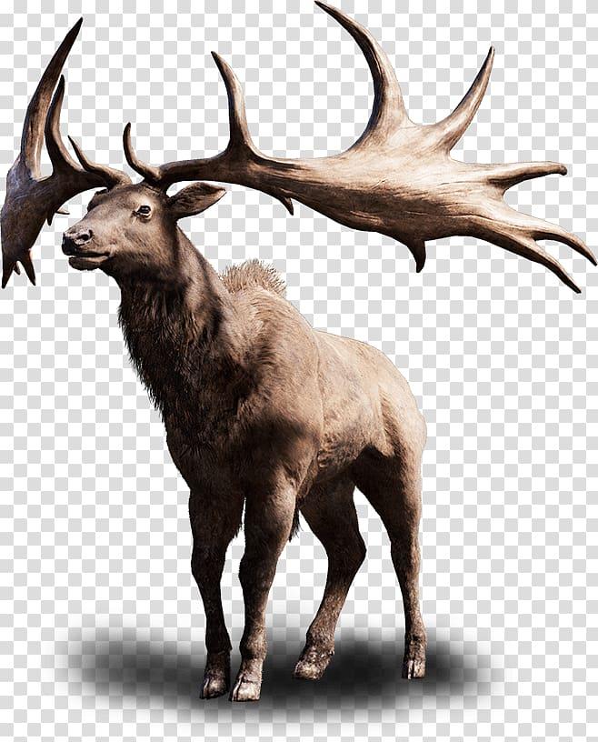 Far Cry Primal Irish Elk Far Cry 4 PlayStation 4, animal hair.