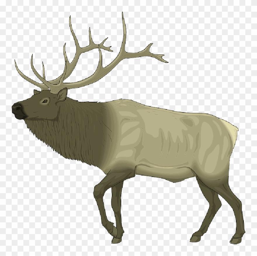 Elk Clip Art Free , Png Download.