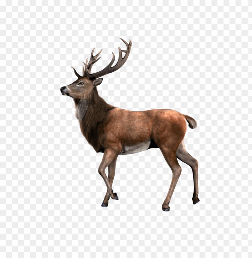 Download elk png images background.