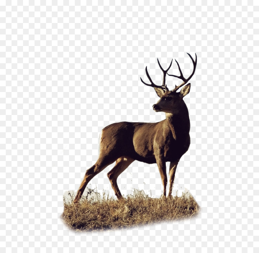 Elk Png (106+ images in Collection) Page 2.