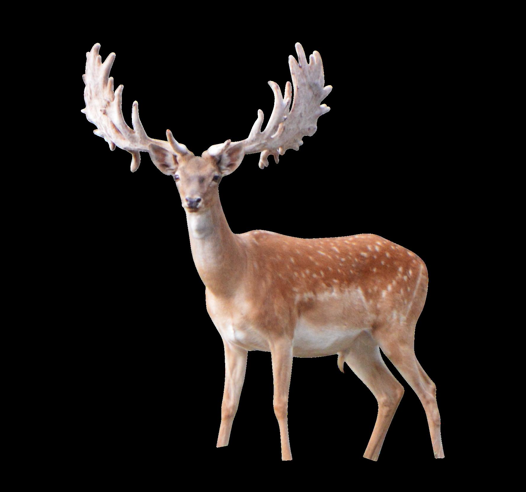 Elk PNG Image File.