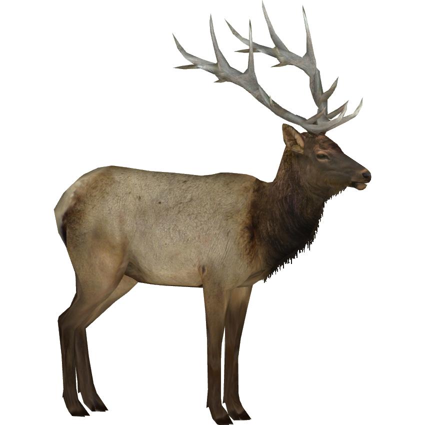 Elk Png & Free Elk.png Transparent Images #3116.