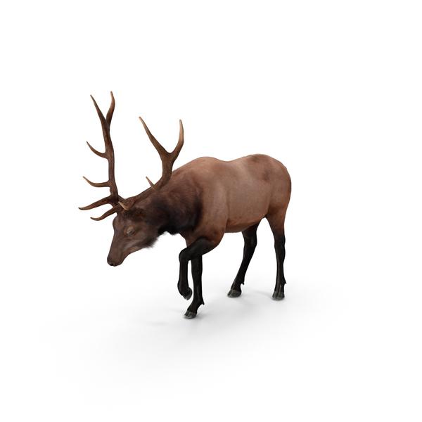 Elk PNG Images & PSDs for Download.