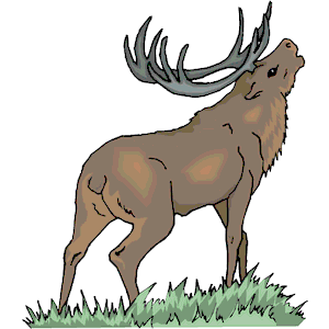 Elk images cartoon.
