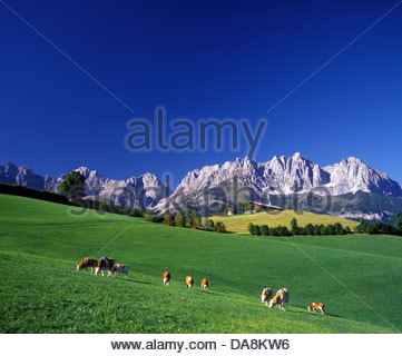 Austria, Europe, Tyrol, Going, Going, Wilder Kaiser, Winter, Snow.