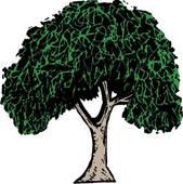 Clipart of , elm, tree, varieties, u15630710.