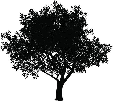Free clipart elm tree.
