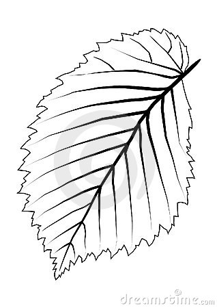 Leaf Tree Outline Stock Photography.