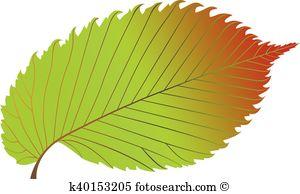 Elm leaf Clip Art Vector Graphics. 617 elm leaf EPS clipart vector.