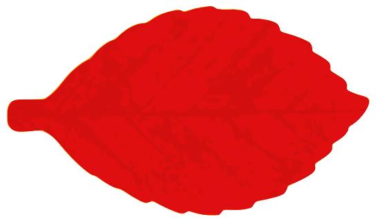 elm leaf.