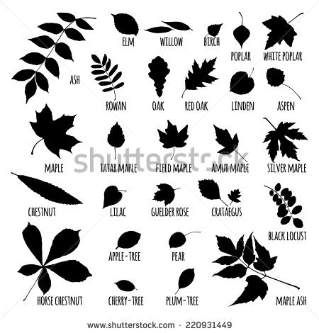 Silhouettes Tree Leaves Elm Beech Ash Stock Vector 220931449.