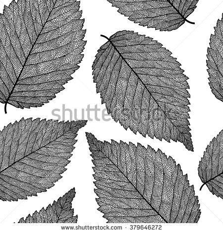 Elm Leaf Stock Vectors & Vector Clip Art.