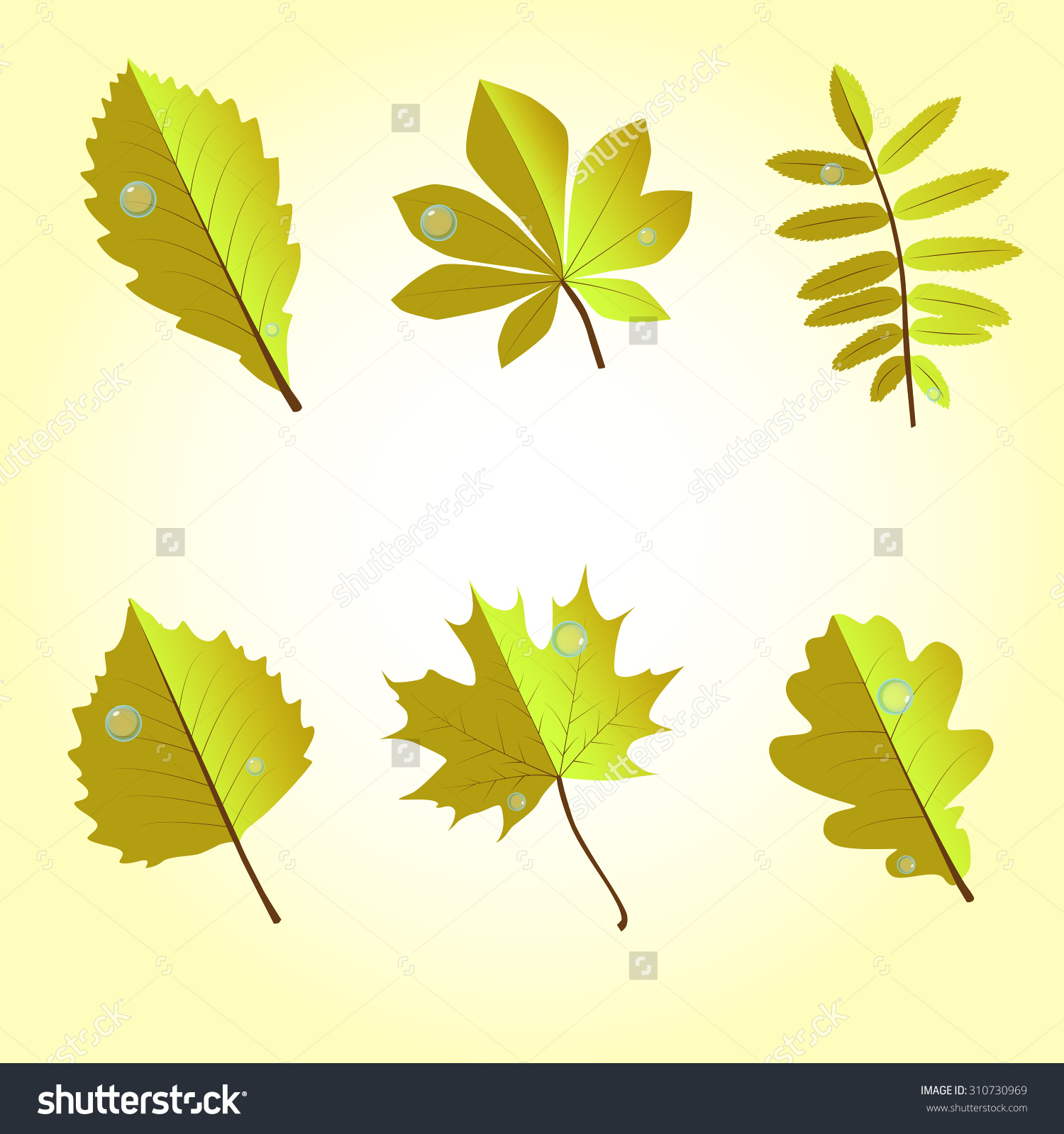 Birch, Maple, Foliage, Green, Red, Foliage, Oak, Mountain Ash, Elm.