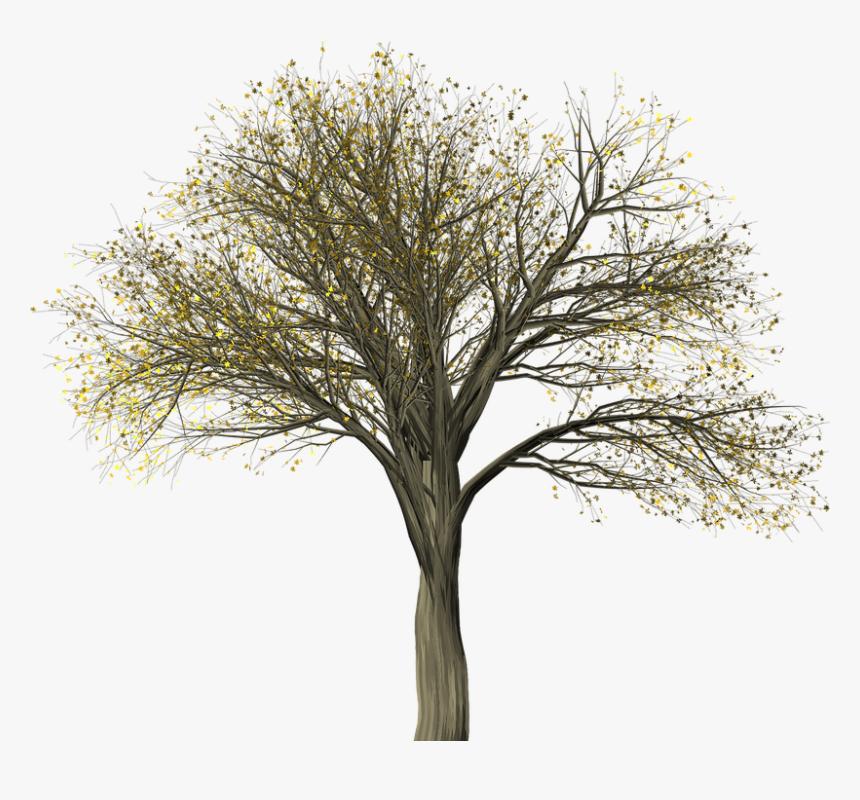 Tree, Elm, Elm Tree, Isolated, Leaf, Autumn, Fall.