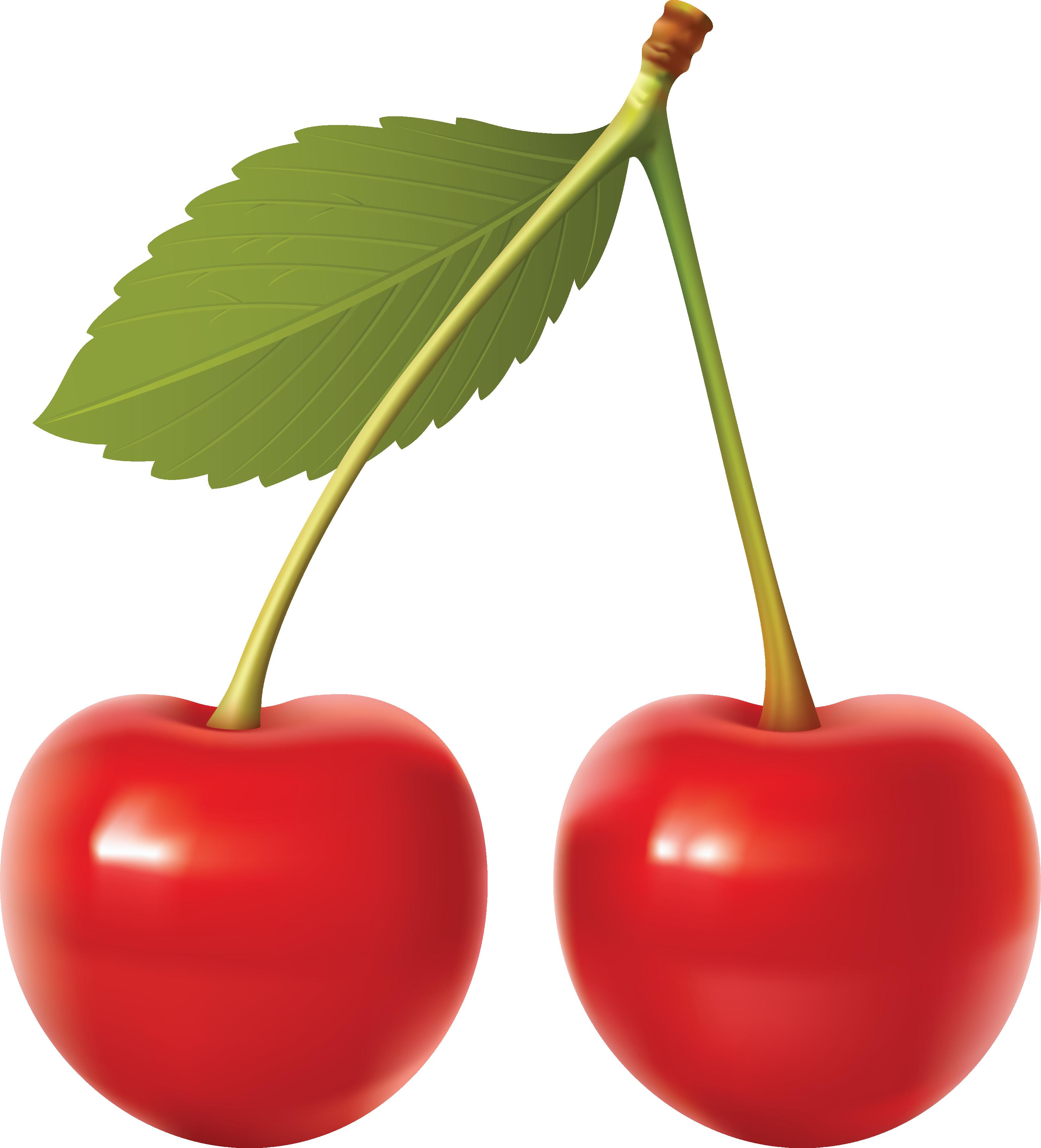 Cherry Fruit Clip Art.