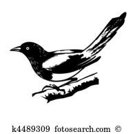 Elster Clip Art und Illustrationen. 192 elster Clipart Vector EPS.