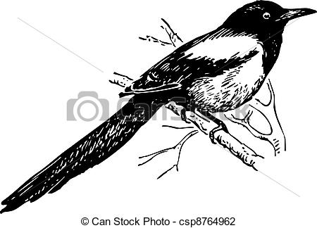 Vector Illustration of Bird magpie with long tail sitting on the.