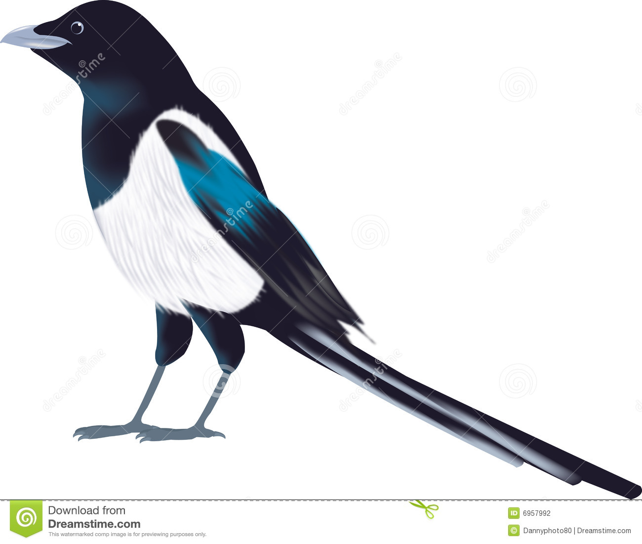 Magpie Clipart Page 1.