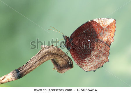 Palmfly Stock Photos, Royalty.