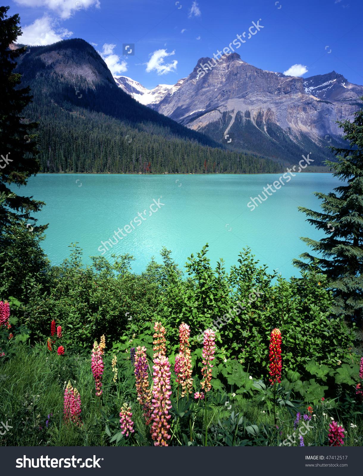Emerald Lake Flowers Yoho National Park Stock Photo 47412517.