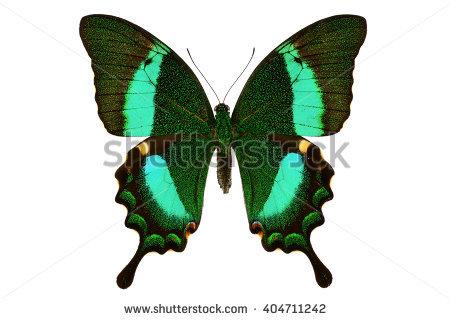 Emerald Swallowtail Stock Photos, Royalty.