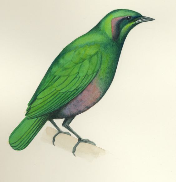Starling, Animals and Emeralds on Pinterest.