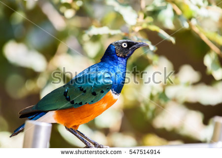 Emerald Starling Eater Artificial This Bird Stock Photo 106498367.