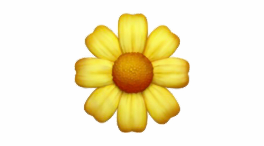 daisy #yellow #flower #cute #tumblr #overlay #interesting.