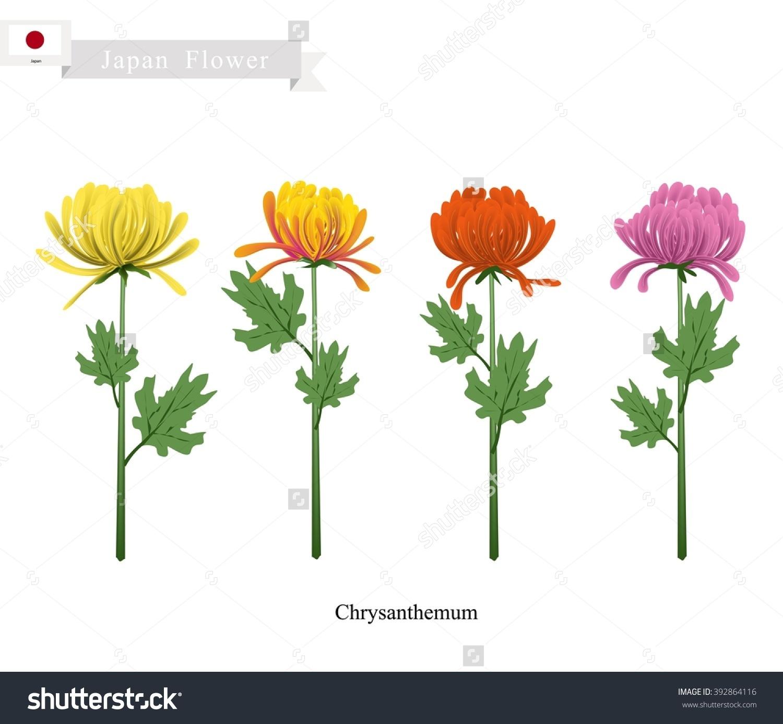 Japan Flower Illustration Chrysanthemum Flowers Symbol Stock.