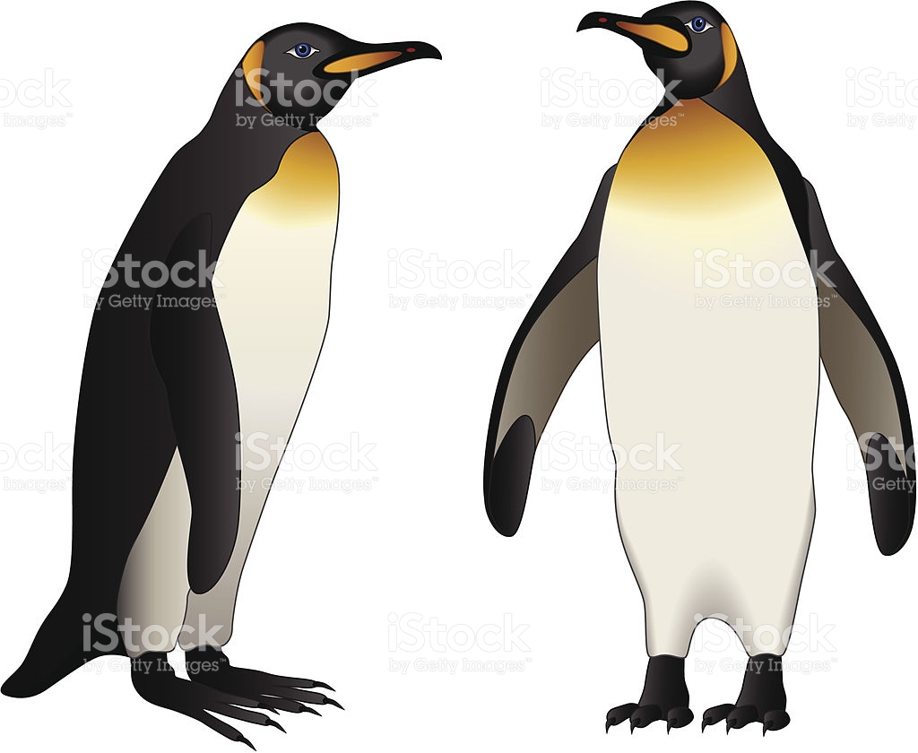 Emperor Penguin Clip Art, Vector Images & Illustrations.