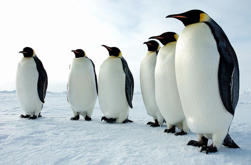 Penguin Pictures.