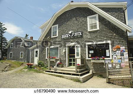 Stock Photography of Monhegan Island, ME, Maine, Black Duck.