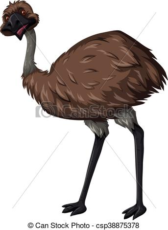 Vectors Illustration of Emu bird with brown feather illustration.