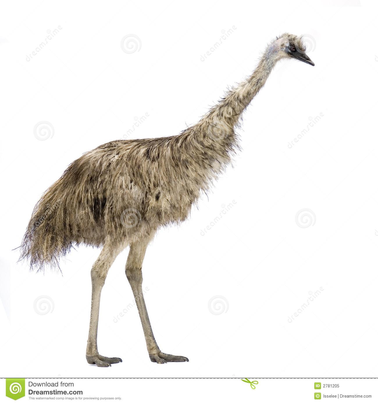 emu clipart #14.