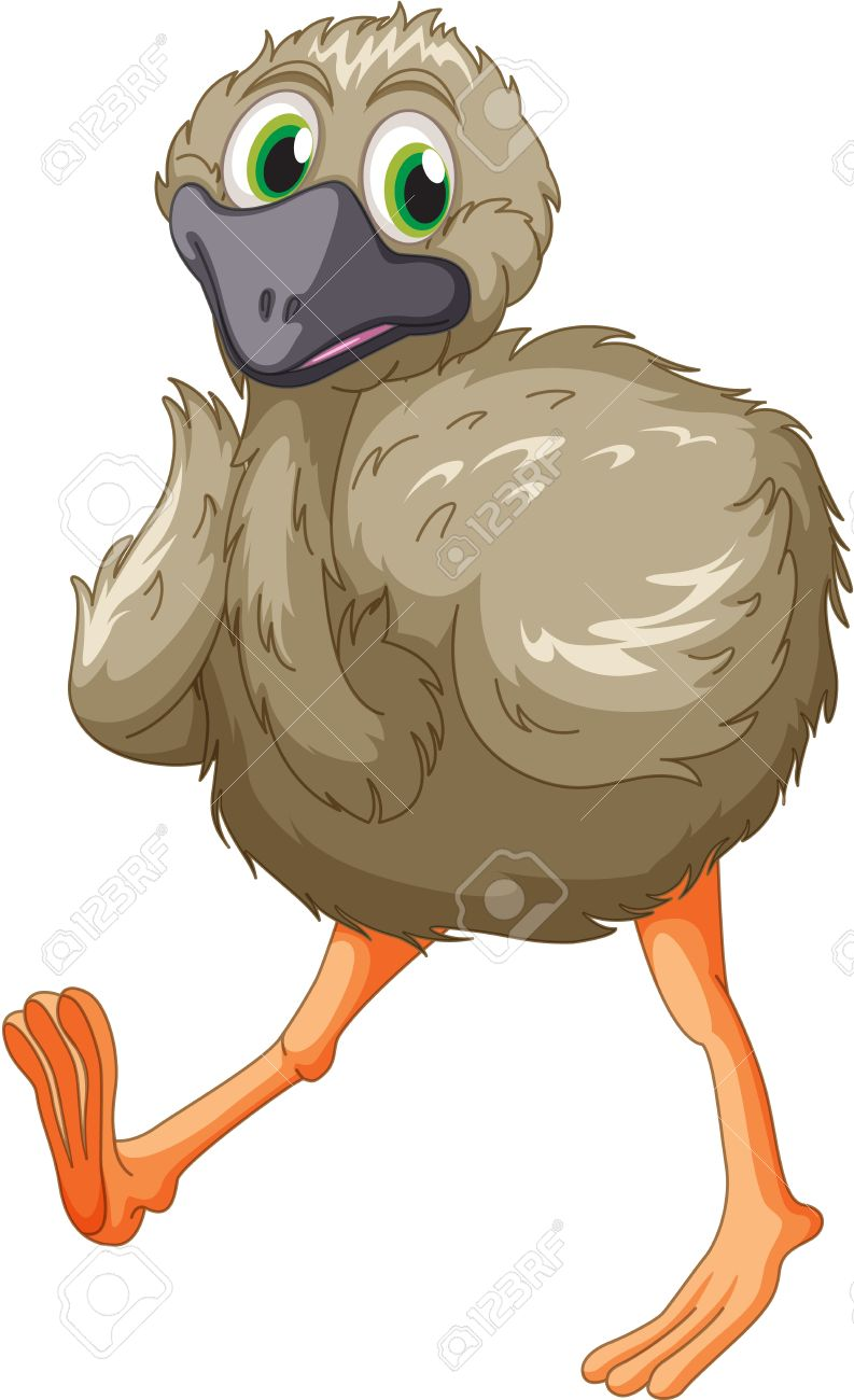 Cartoon Of An Emu On White Royalty Free Cliparts, Vectors, And.