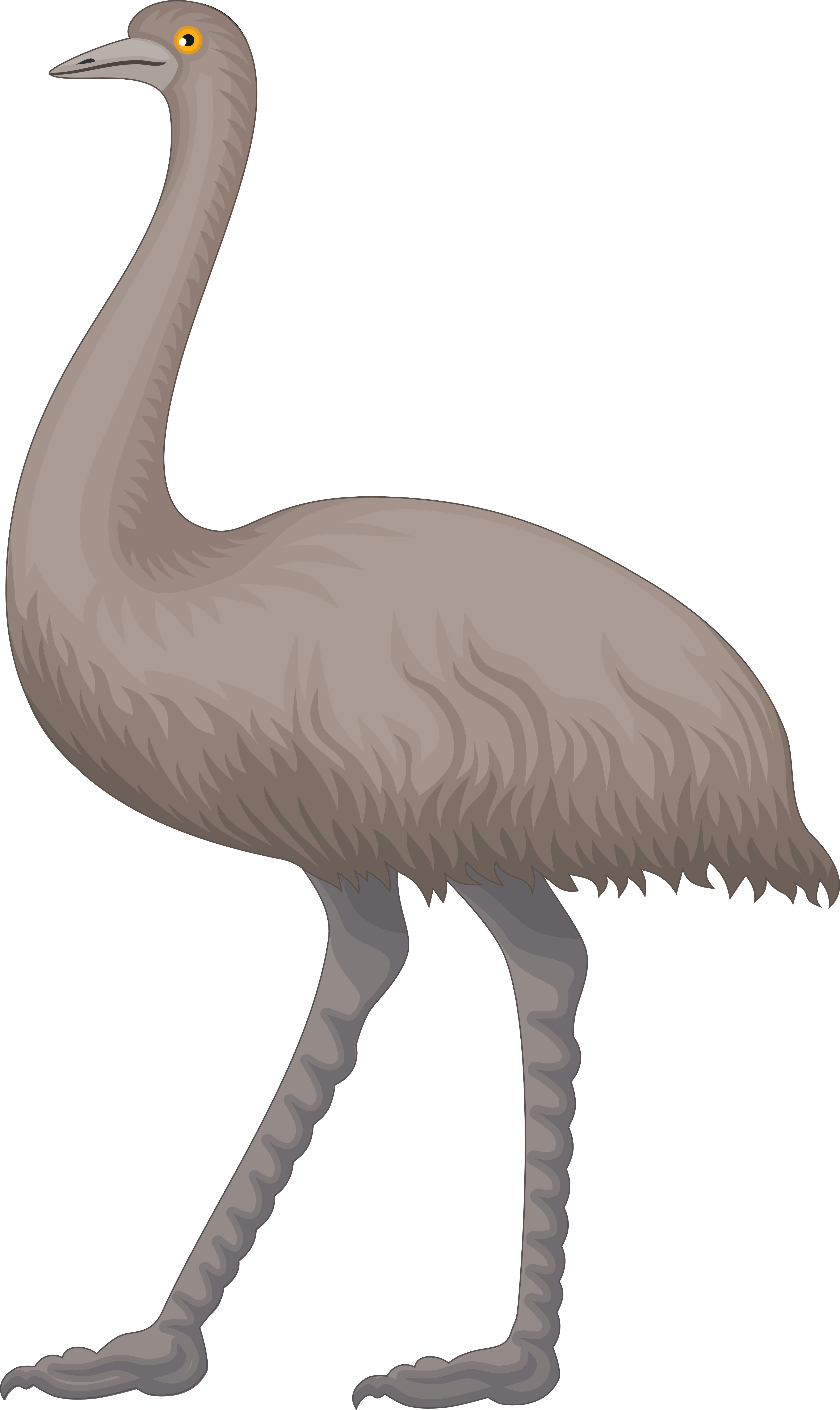 Free Clipart Of An Emu.
