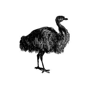 Emu Clipart.