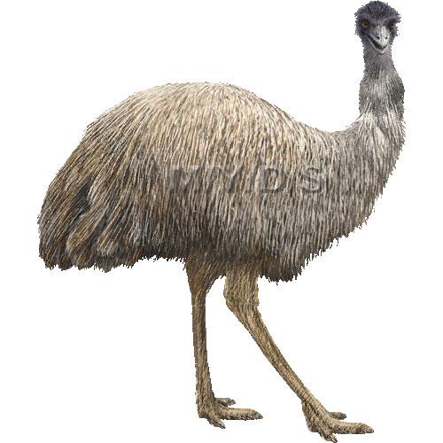 Emu clipart graphics (Free clip art.