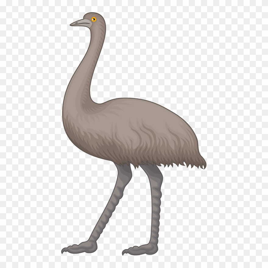 Ostrich Cliparts 12, Buy Clip Art.