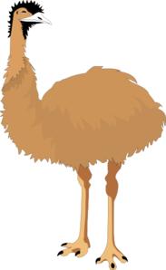 Emus clipart.