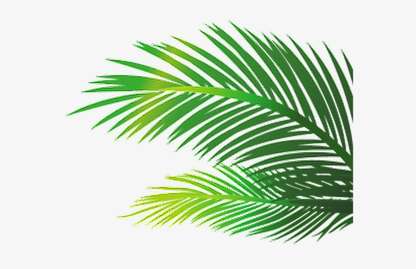 Palm Leaves Png Images Vectors And Psd Files Free.