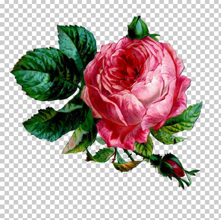 Enchanted Rose Tea Parlour And Gift Boutique PNG, Clipart.