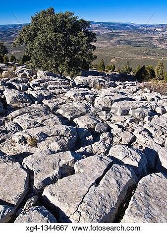 Picture of Lapiaz y encina en la cumbre de la Sierra Esparraguera.