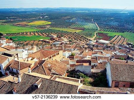 Stock Photograph of Overview and olive groves. Baos de la Encina.