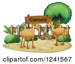 Clipart of Two Saddled Camels.
